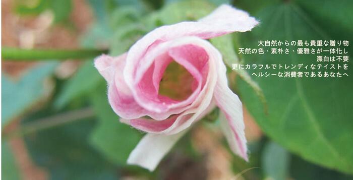 proimages/dm/彩棉日.jpg